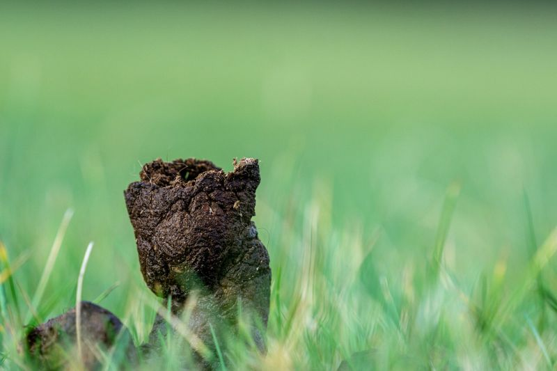what is in your dog's poop