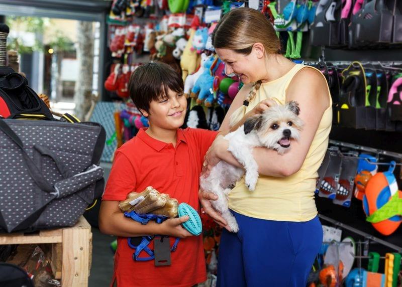 dog supplies and needs