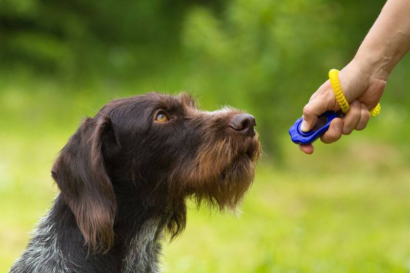 training gadgets for dogs