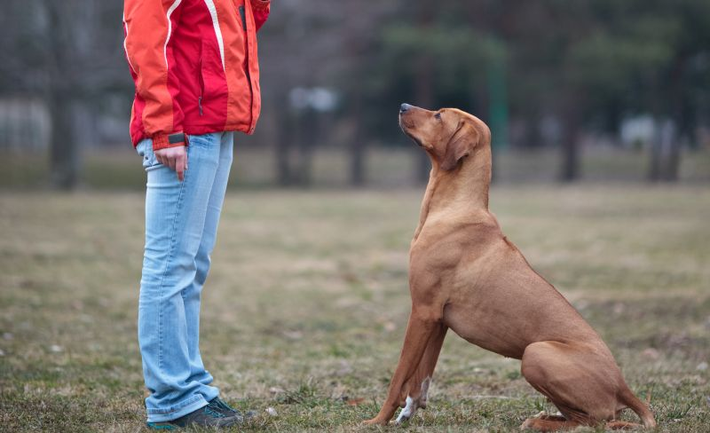 Benefits of whistle training for dogs
