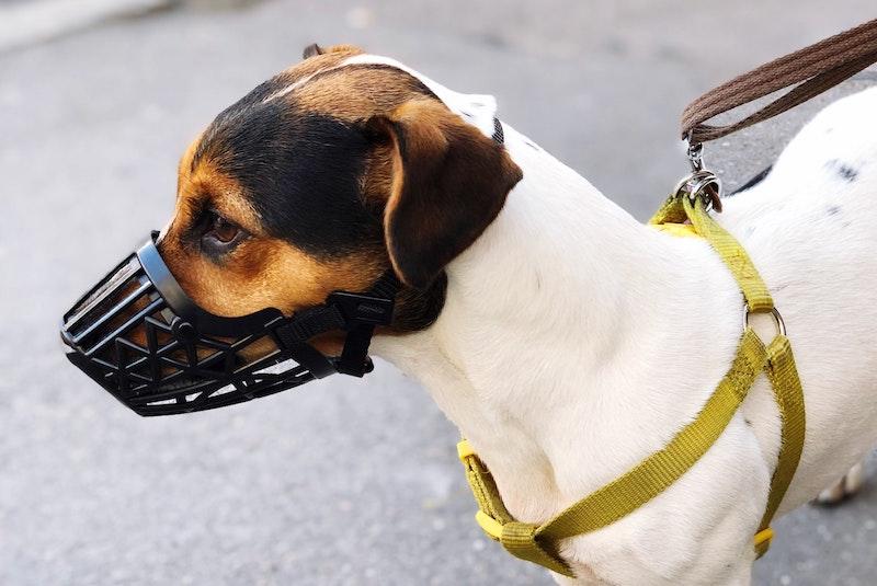 dog-wearing-muzzle