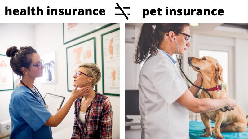 health insurance vs pet insurance