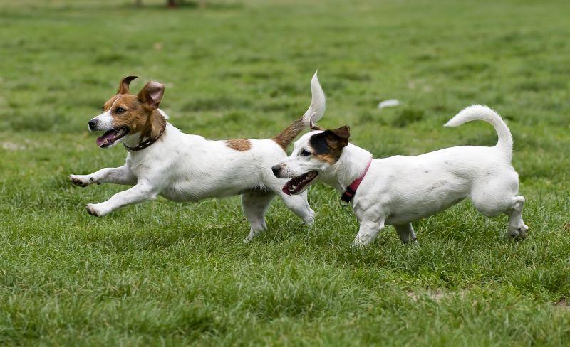 introduce dogs off leash