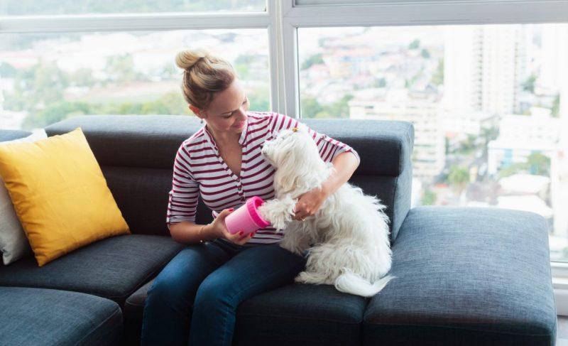 paw washing gadget keeps paws clean
