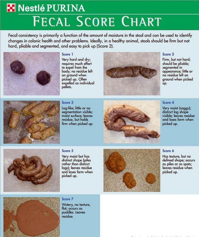 poop score chart