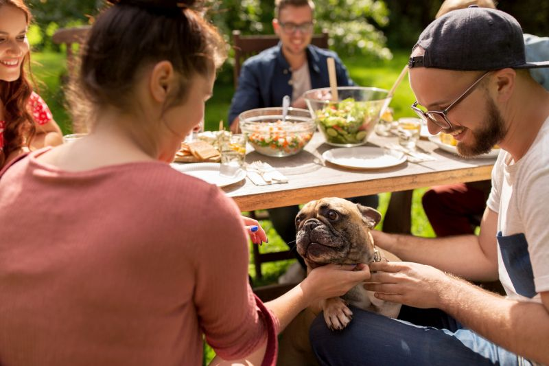 ground rules will keep dog and guests happy