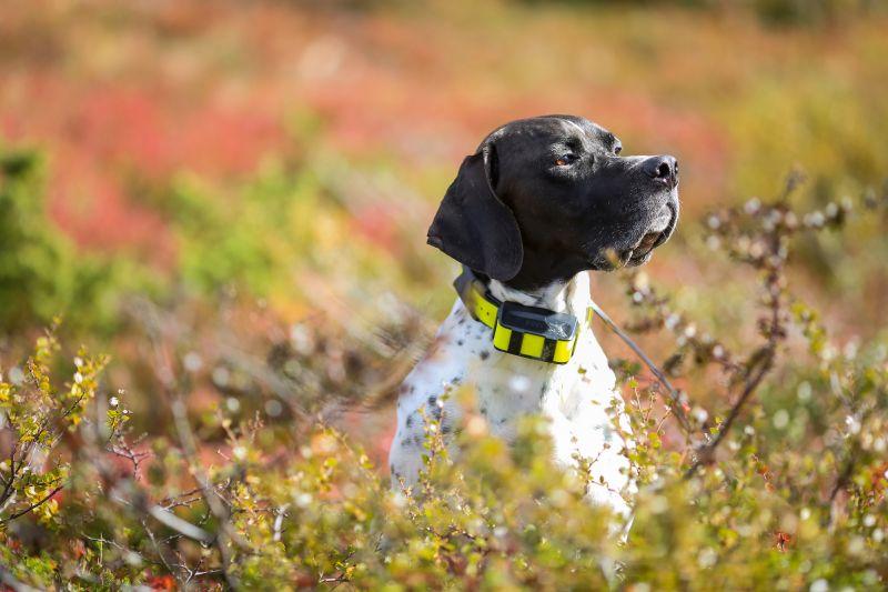 Dog safety gear gadgets