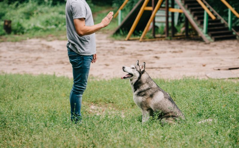 teaching your dog with a whistle
