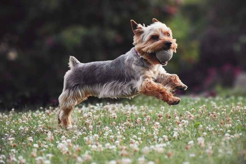take action photos of your pet