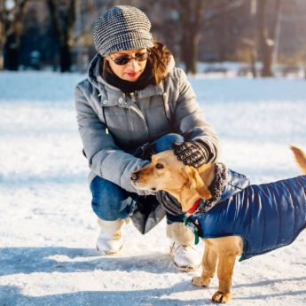 coats for small dogs