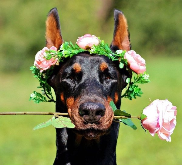 dog flower wreath