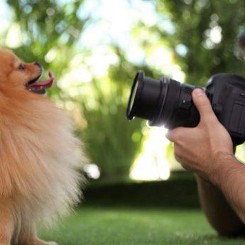 taking better dog photos