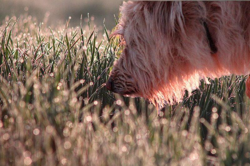 dog smelling outside