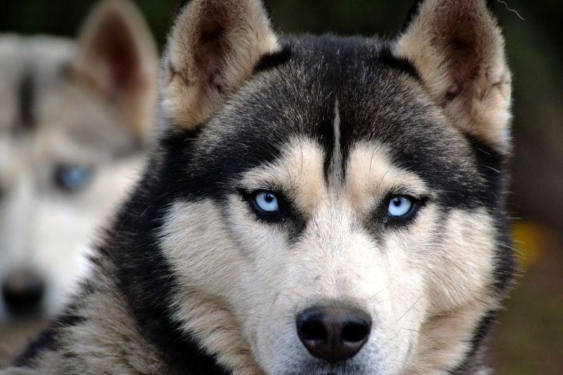 dog eye photos are great