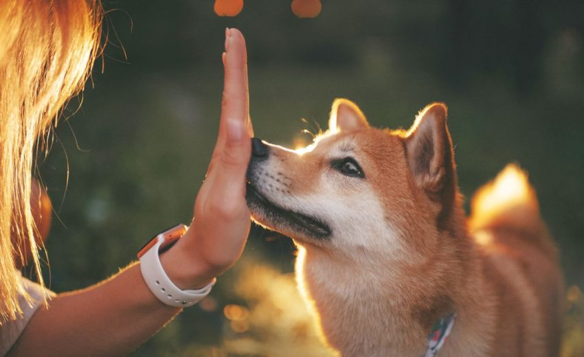 teaching dogs to hand target