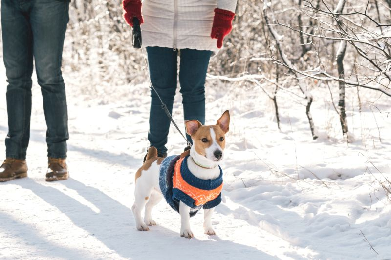 how to pick a dog coat