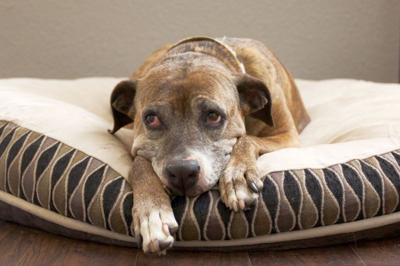 heartworm can cause lethargy