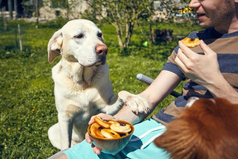 many dogs beg for people food