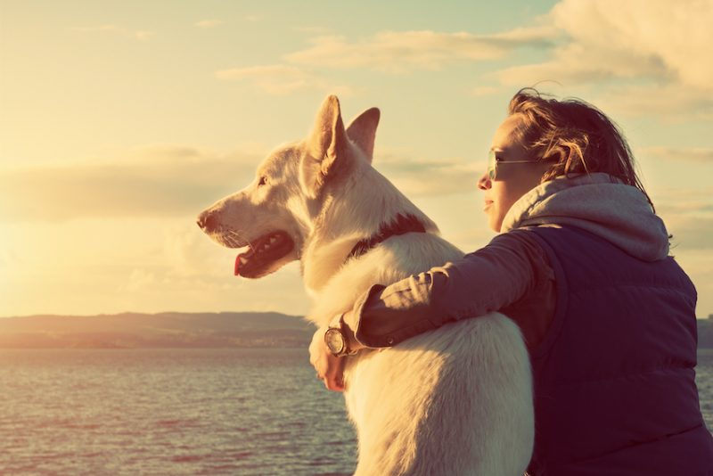 dog empathy
