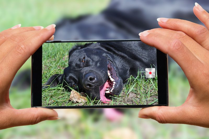 Using a phone for dog photos