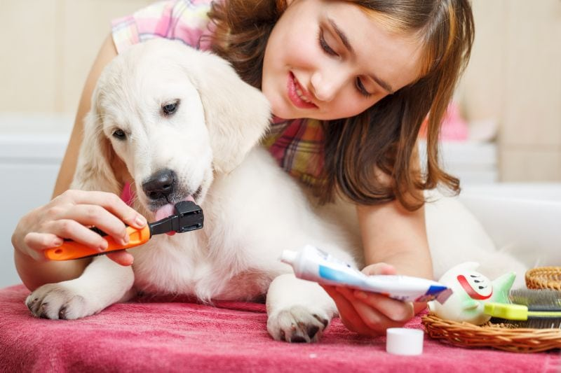 how to make diy dog toothpaste
