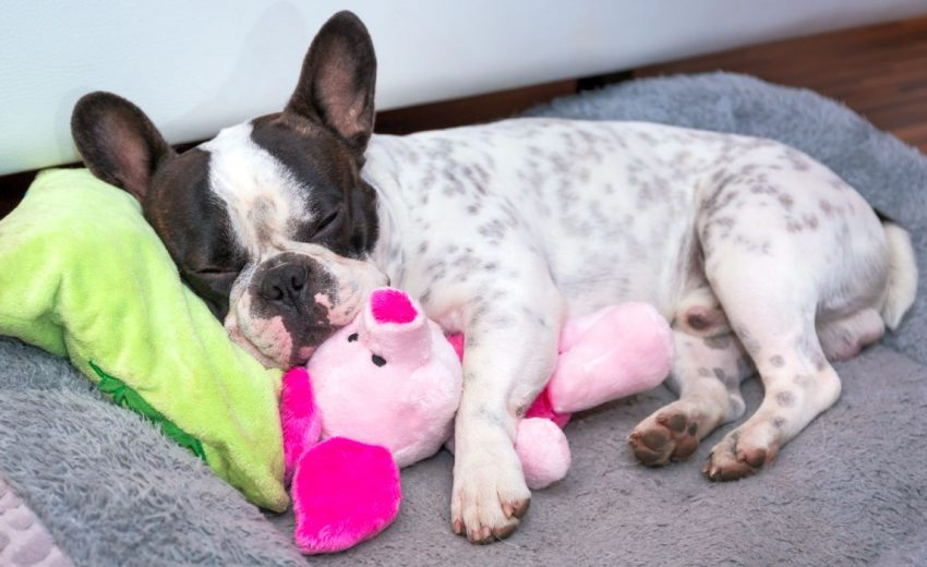 good soft toys for dogs