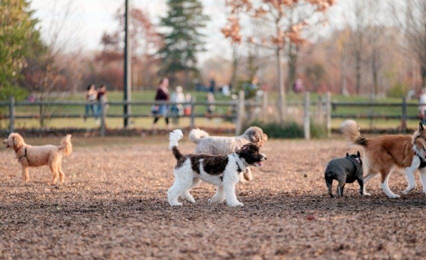 alternatives to dog parks