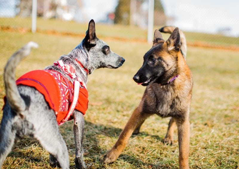 Dogs like playdates with other dogs