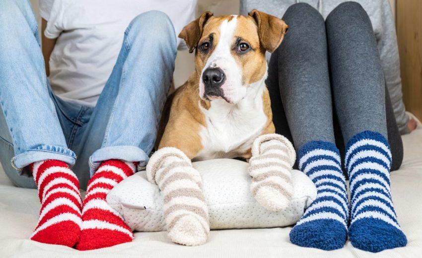 dog socks for slick floors
