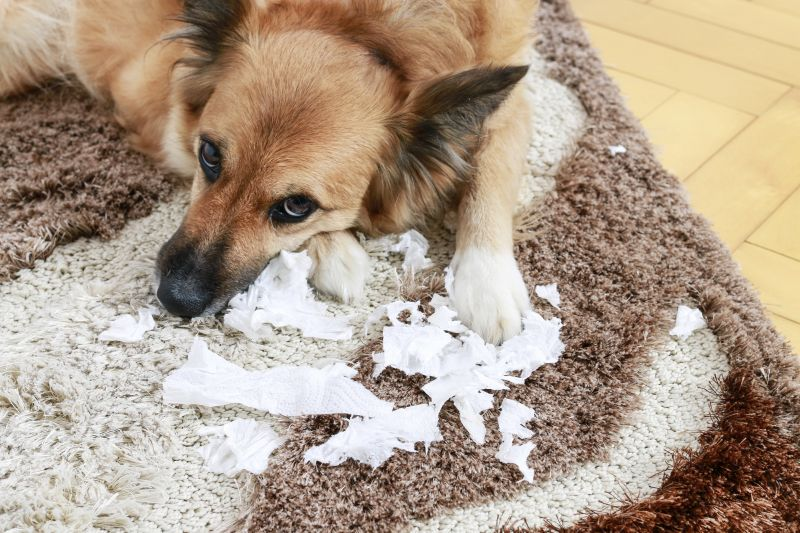 some dogs eat inedible items