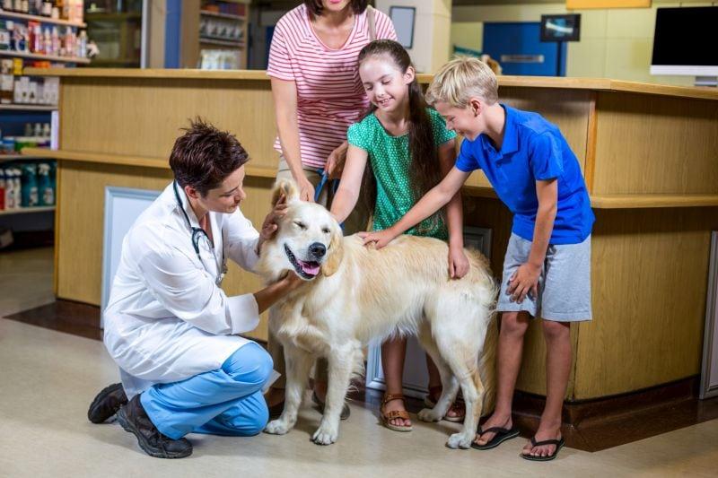 Visit the vet for fun