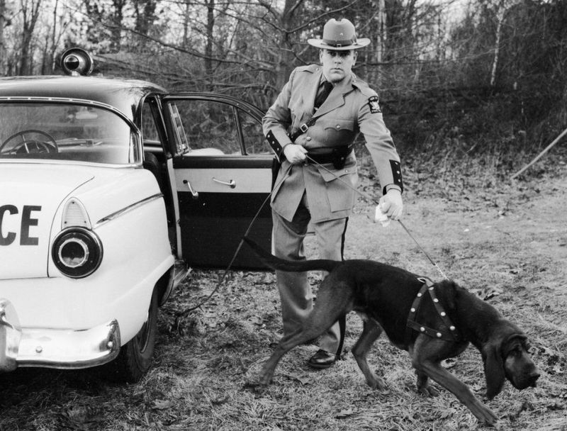 history of police dogs