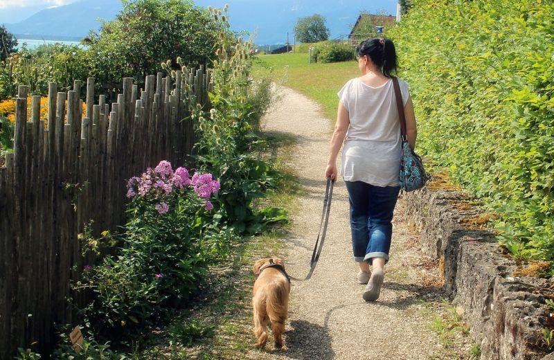 dogs love long walks