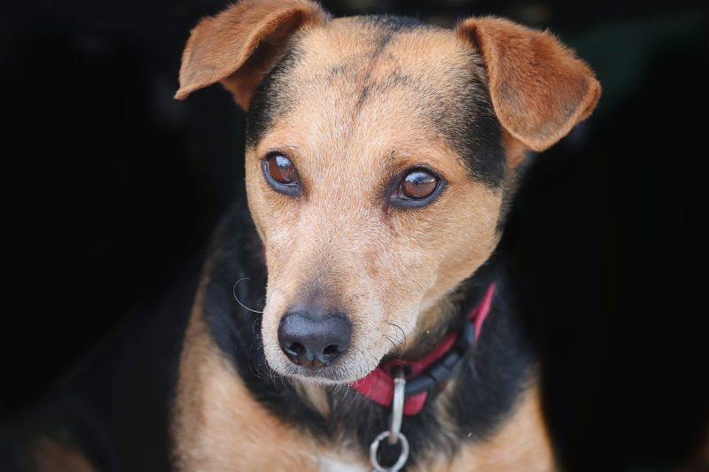 mixed breed and hybrid dogs