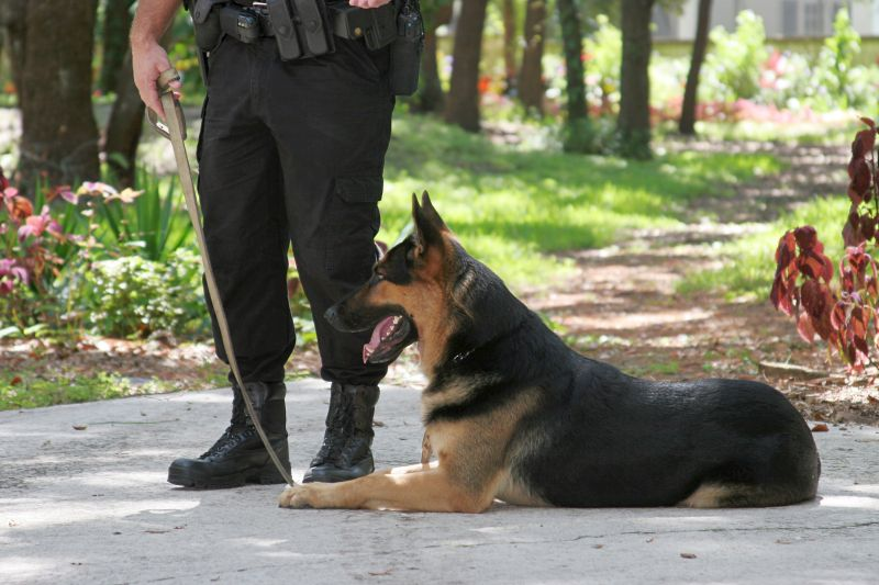 The skills of police dogs