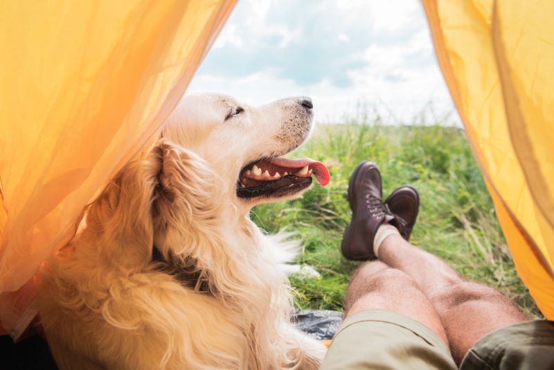 go camping with dog