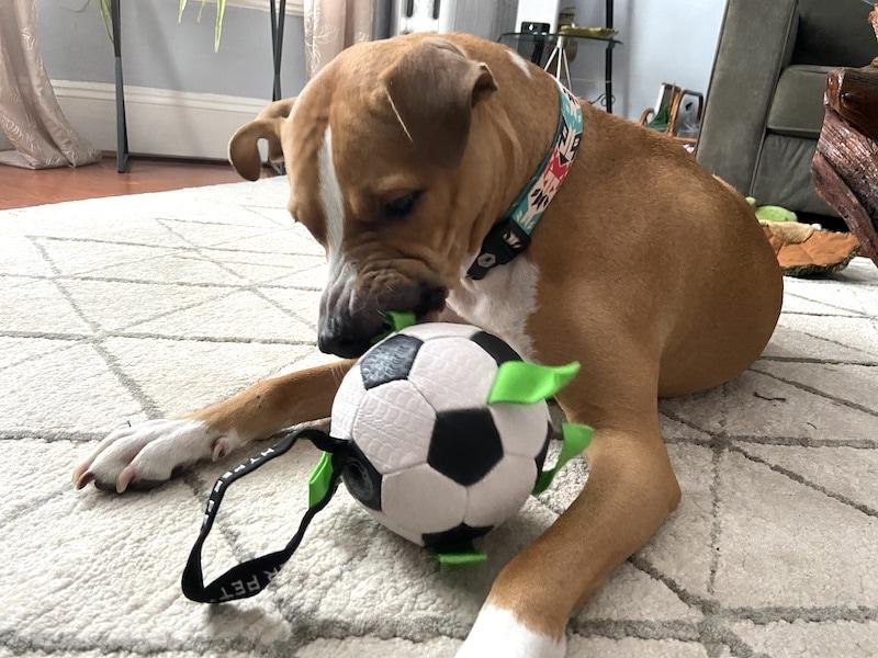 soccer ball for dogs