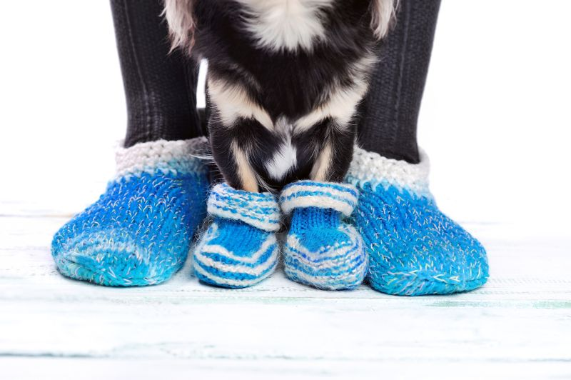 socks give dogs traction