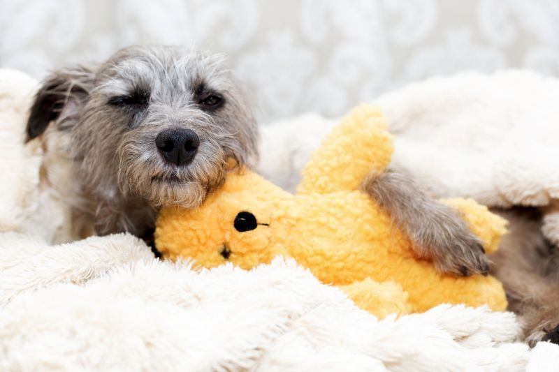 dogs like snuggling with soft toys