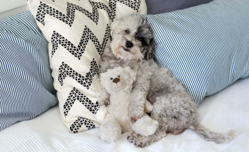 dogs love soft toys