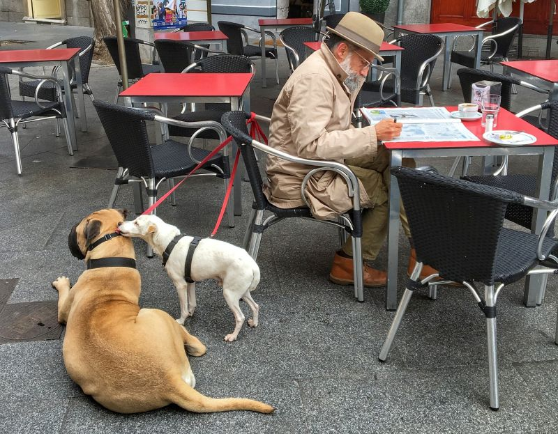 dog-friendly restaurants are good to visit