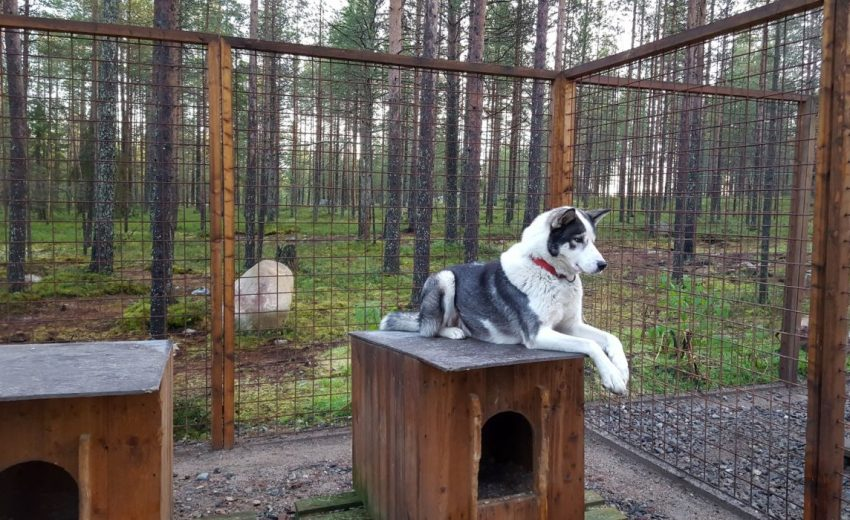 Build your own dog pen