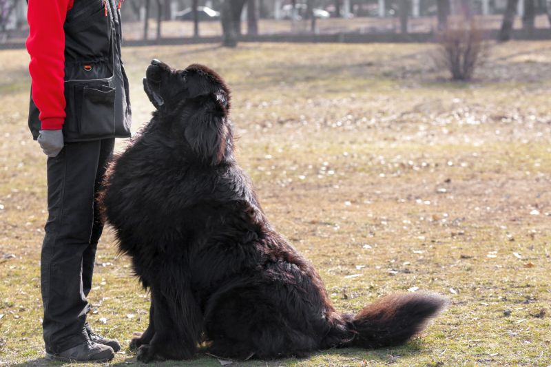 Moscow water dog personality