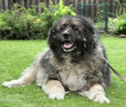 Russian Prison Dog