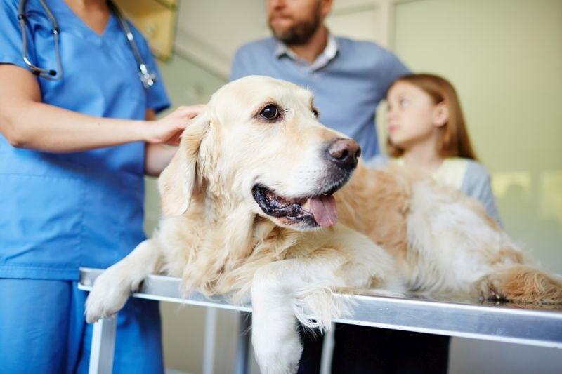 dog constipation symptoms