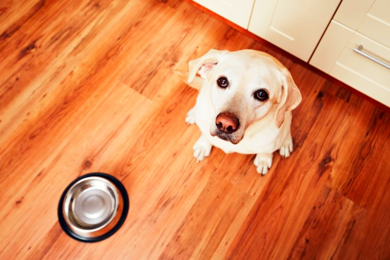 The cost of dog food