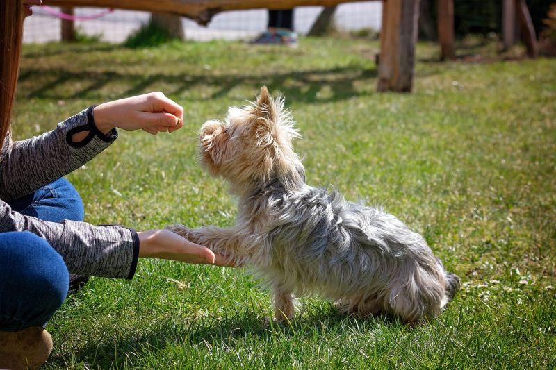 photos of dogs training