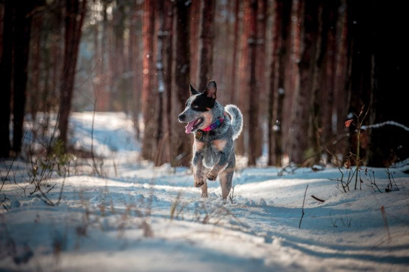 photos of dogs in nature
