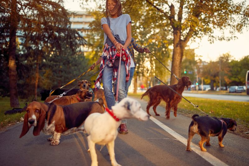 you may need a dog walker