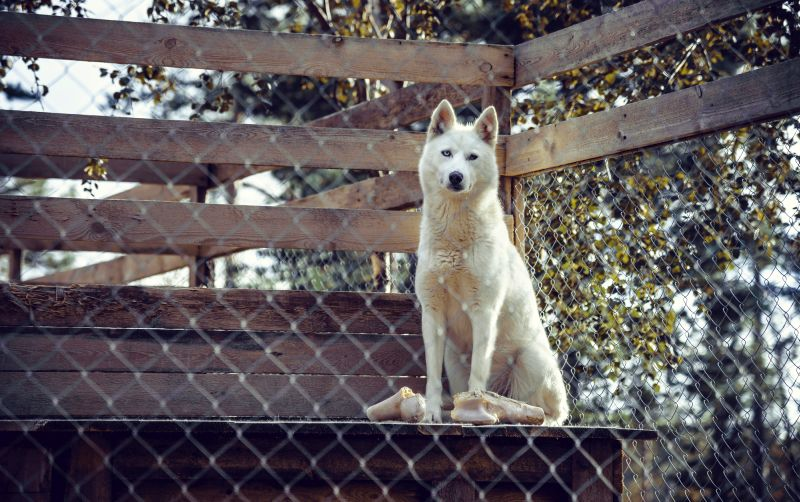 Learn how to make dog pen